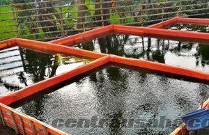 Usaha budidaya lele di kolam terpal