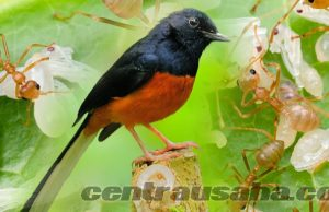 Usaha Ternak Budidaya Kroto Pakan Burung