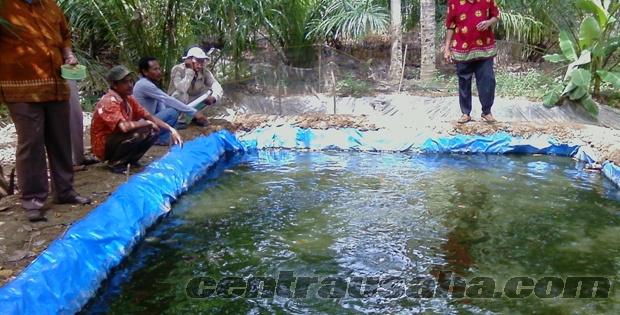 Membuat kolam terpal