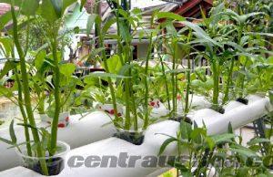 Usaha bidang agribisinis pertanian yang menguntungkan